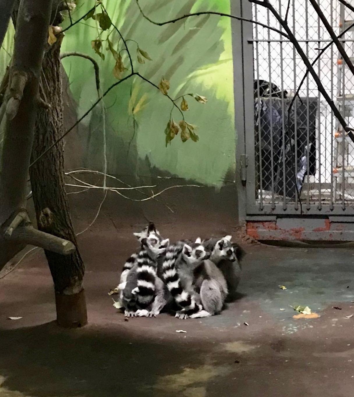 Раскрыл новое преступление организованного преступного сообщества в свердловском зоопарке по ст. 210 УК РФ.